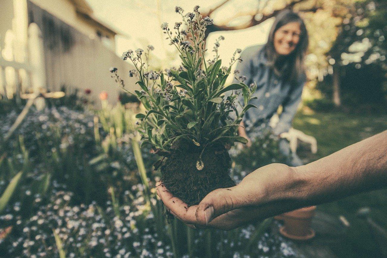 vrtnarjenje za začetnike